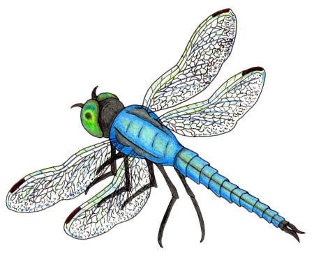 World Of Water . - Insects And Bugs, Transparent background PNG HD thumbnail