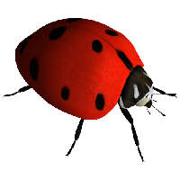 Ladybug Png Image Png Image - Insects, Transparent background PNG HD thumbnail