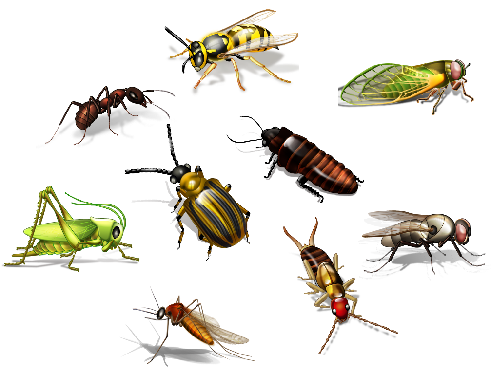 Two Ways To Choose Your Insects - Insects, Transparent background PNG HD thumbnail