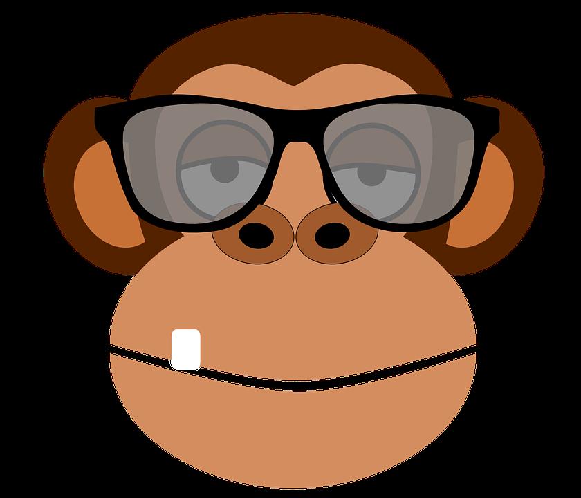 Monkey, Intelligent, Glasses, Primate, Animal, Wildlife - Intelligent, Transparent background PNG HD thumbnail