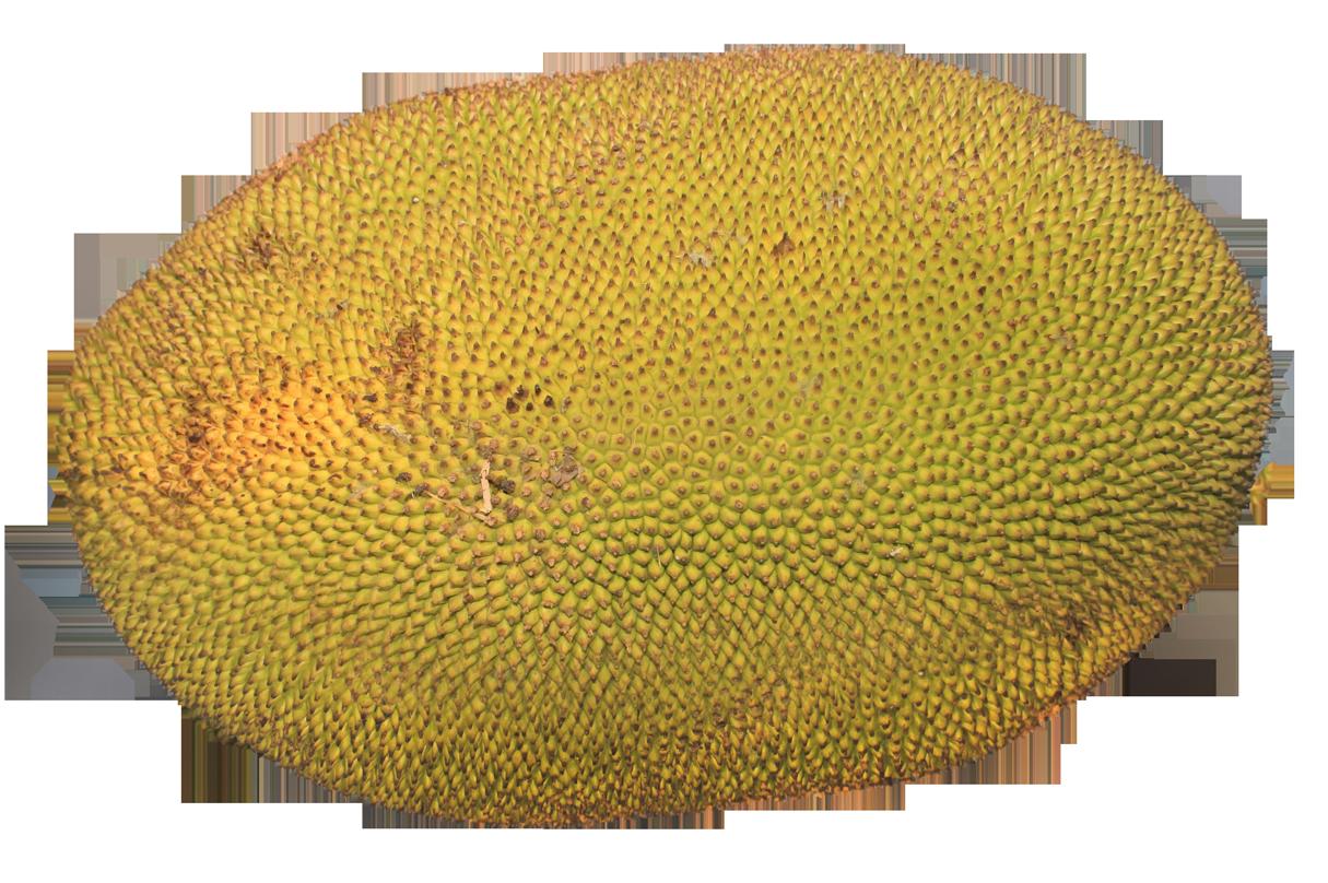 PNG Jackfruit