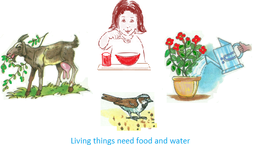 Living Things Need Food And Water - Living Things, Transparent background PNG HD thumbnail