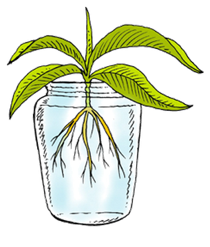 Non Living Things Clipart - Living Things, Transparent background PNG HD thumbnail