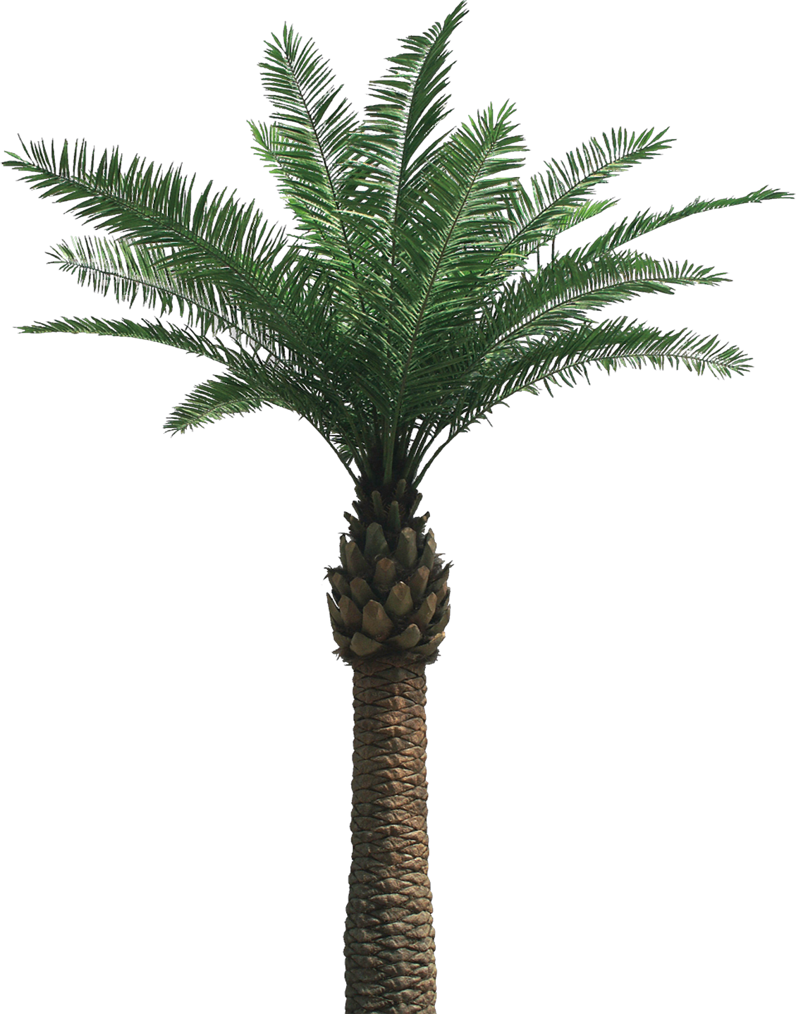 Free Palm Tree Removal - Palm Tree, Transparent background PNG HD thumbnail