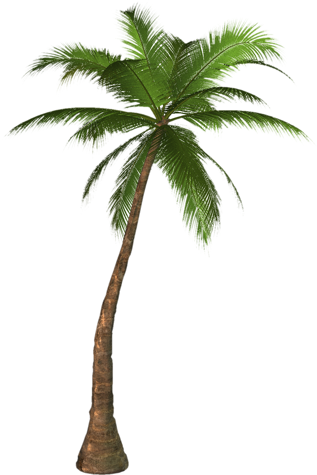 Palm Tree Png Image #31881 - Palm Tree, Transparent background PNG HD thumbnail