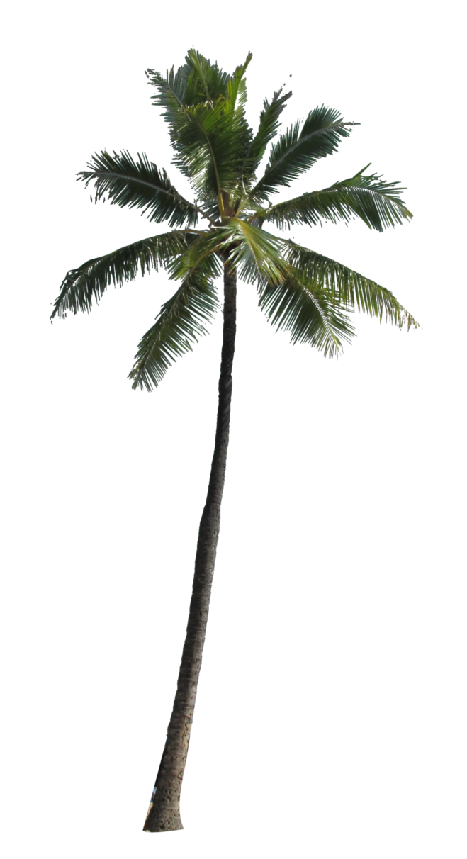 Palm Tree Png Image - Palm Tree, Transparent background PNG HD thumbnail
