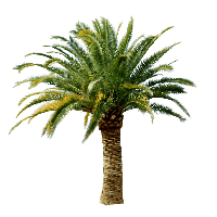 Palm Tree Png Png Image - Palm Tree, Transparent background PNG HD thumbnail