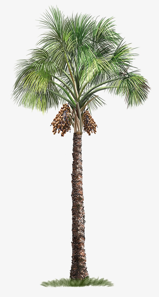 Palm Tree, Trees, Hand Painted Tree Free Png Image - Palm Tree, Transparent background PNG HD thumbnail