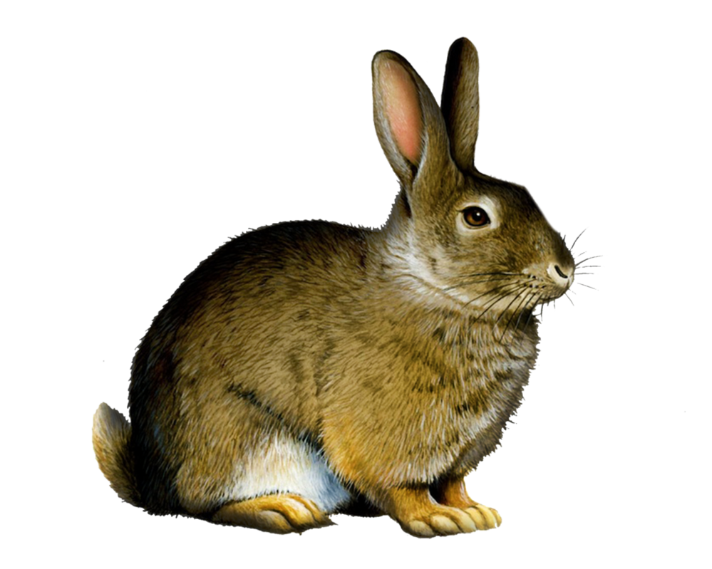 Png Rabbit By Moonglowlilly Hdpng.com  - Rabbit, Transparent background PNG HD thumbnail