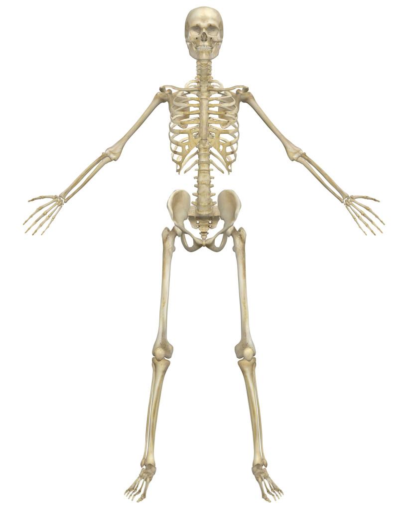 Png Skeleton Bones - Png Skeleton Bones Hdpng.com 819, Transparent background PNG HD thumbnail