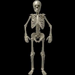 Png Skeleton Bones - Png Ico Icns More, Transparent background PNG HD thumbnail