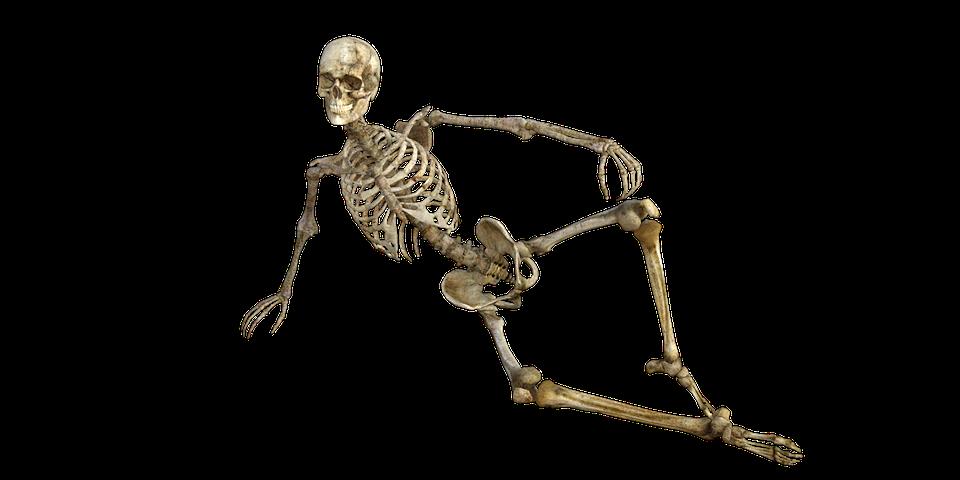 Png Skeleton Bones - Skeleton, Bones, Anatomy, Human, Medical, Body, Transparent background PNG HD thumbnail