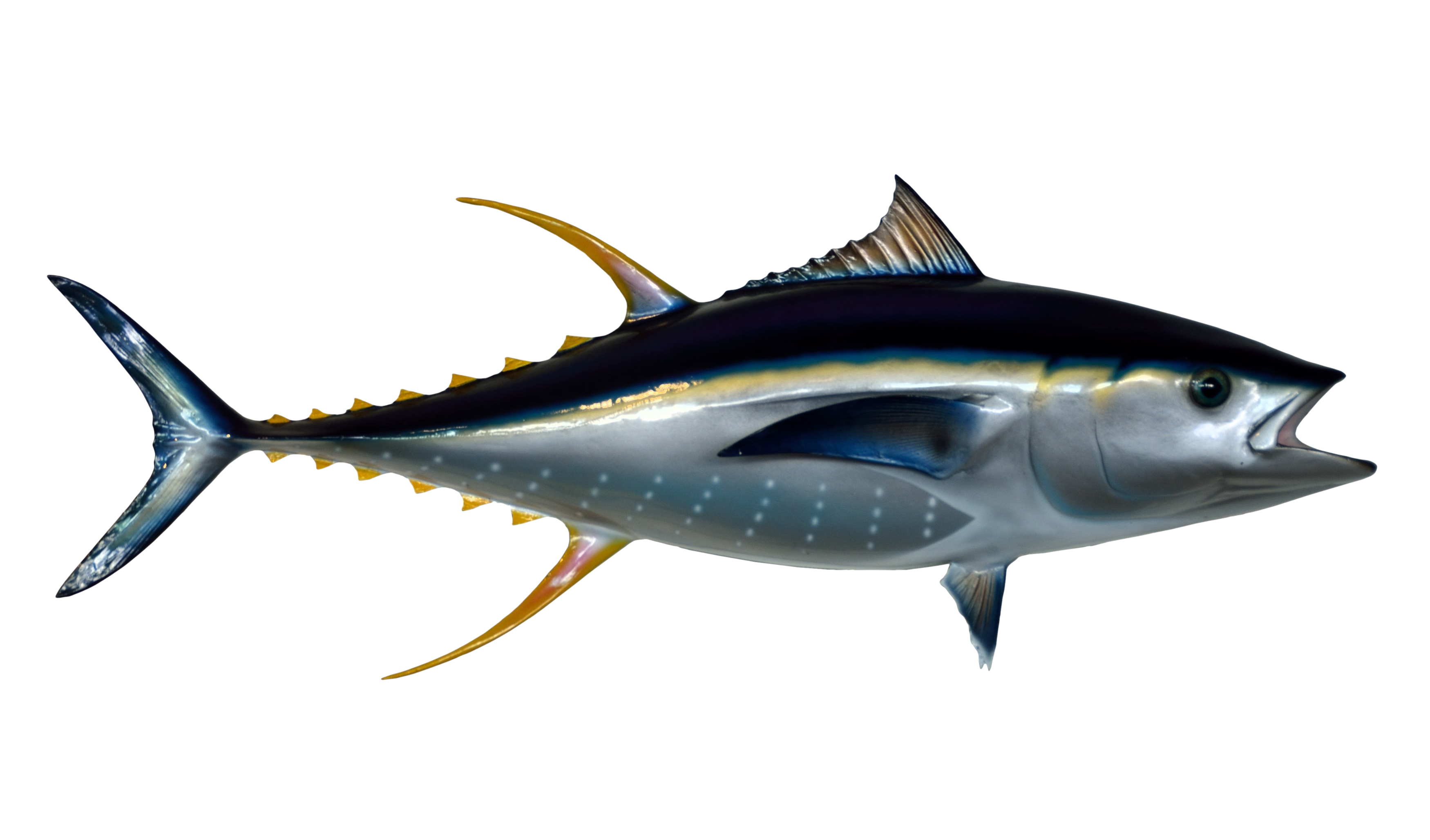 PNG Tuna