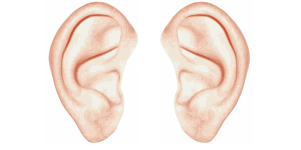 Png Two Ears - Click Image For Larger Version Name: Ears.png Views: 1939 Size: 80.5, Transparent background PNG HD thumbnail