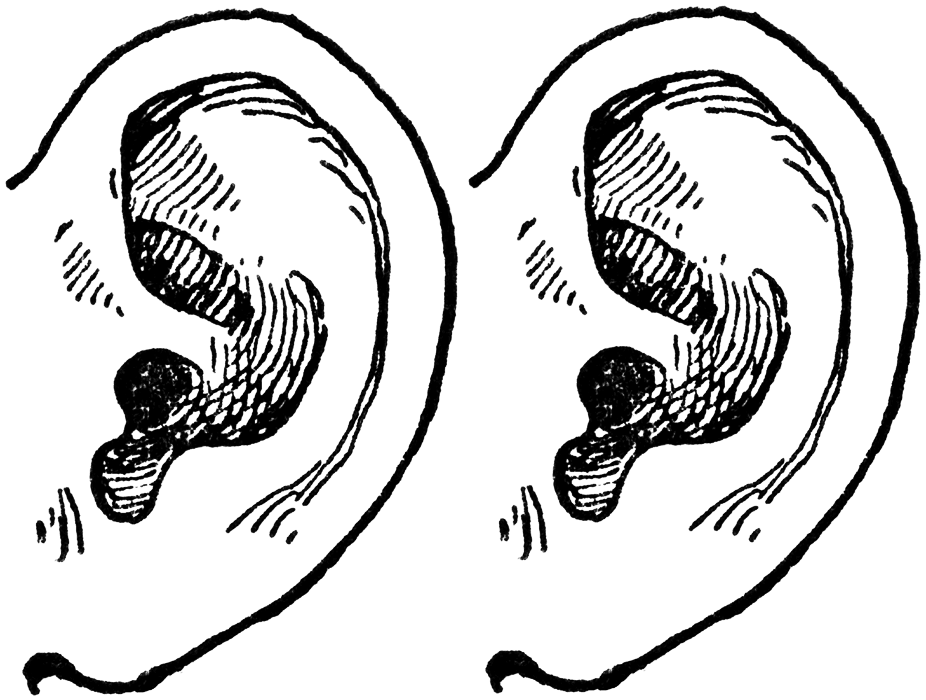 Png Two Ears - Two Ears, Transparent background PNG HD thumbnail