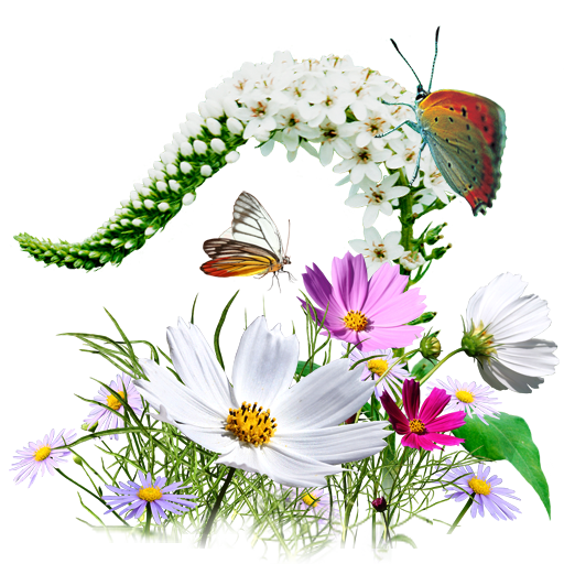 512X512 Pixel - Wildflowers, Transparent background PNG HD thumbnail