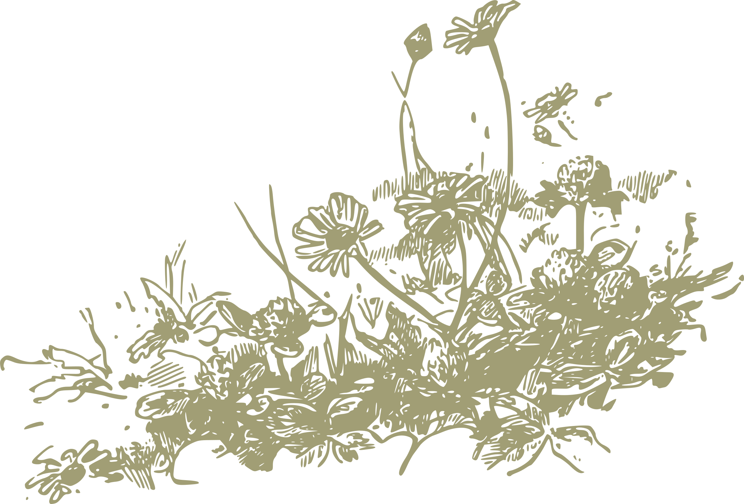Big Image (Png) - Wildflowers, Transparent background PNG HD thumbnail