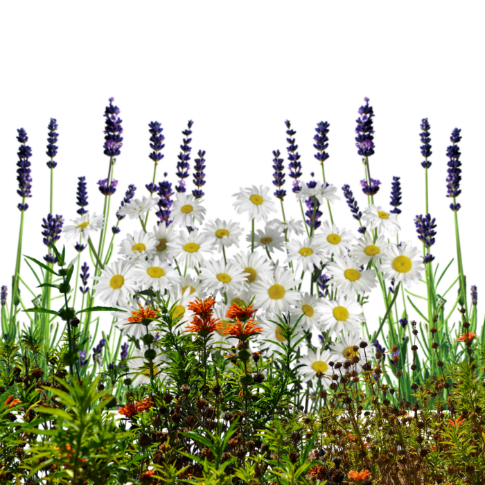 English Wildflowers Cold Cream Cleanser - Wildflowers, Transparent background PNG HD thumbnail
