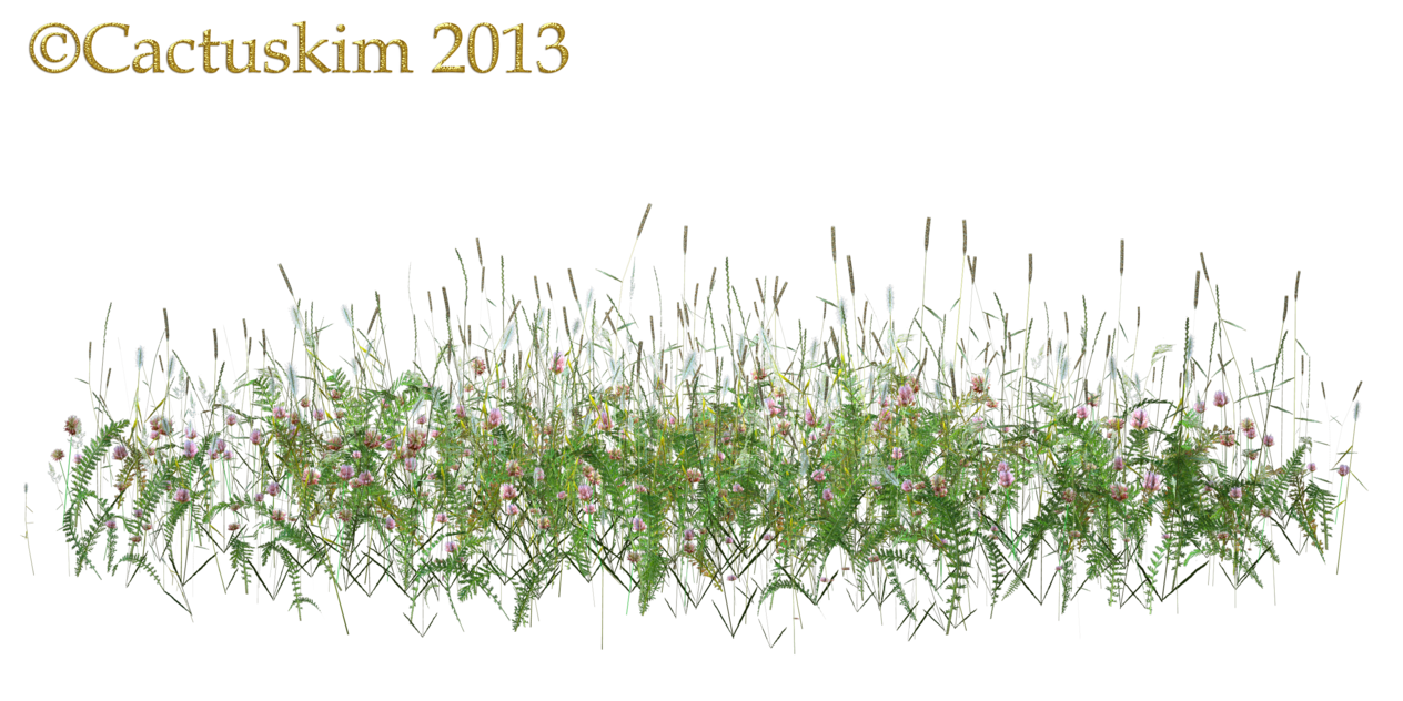 Here Is A Png Of Some Wildflowers/grass Etc On Transparent Background That I Rendered Using Poser. Hope It Comed In Handy, And You Have Fun Using . - Wildflowers, Transparent background PNG HD thumbnail