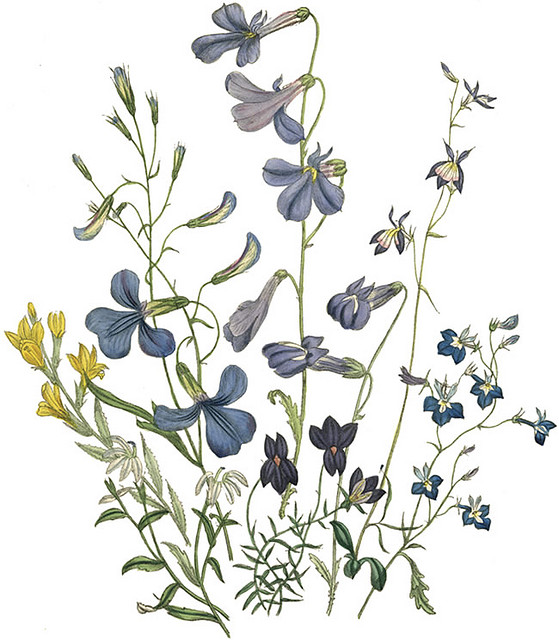 Painted Flowers - Wildflowers, Transparent background PNG HD thumbnail