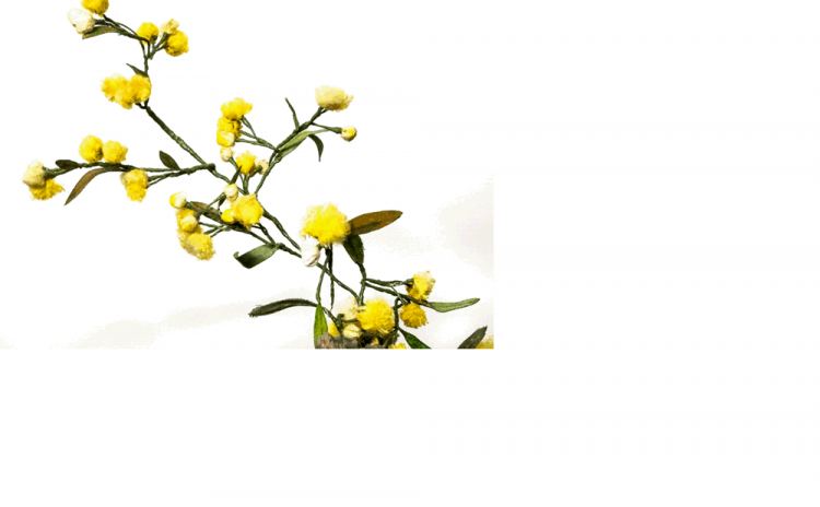 The Fabric Of Wildflowers   The Art Of Thelma Knox - Wildflowers, Transparent background PNG HD thumbnail