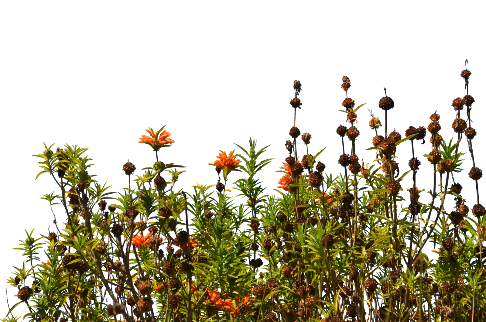 . Hdpng.com Wild Flower Ground Cover Stock Photo 0083 Png 0083 By Annamae22 - Wildflowers, Transparent background PNG HD thumbnail