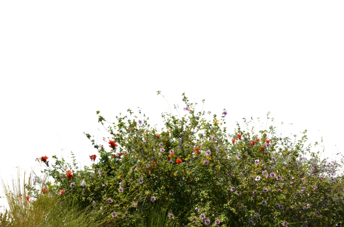 Wild Flowers With Grass 2 Stock Photo  0081 Png By Annamae22 On Deviantart - Wildflowers, Transparent background PNG HD thumbnail