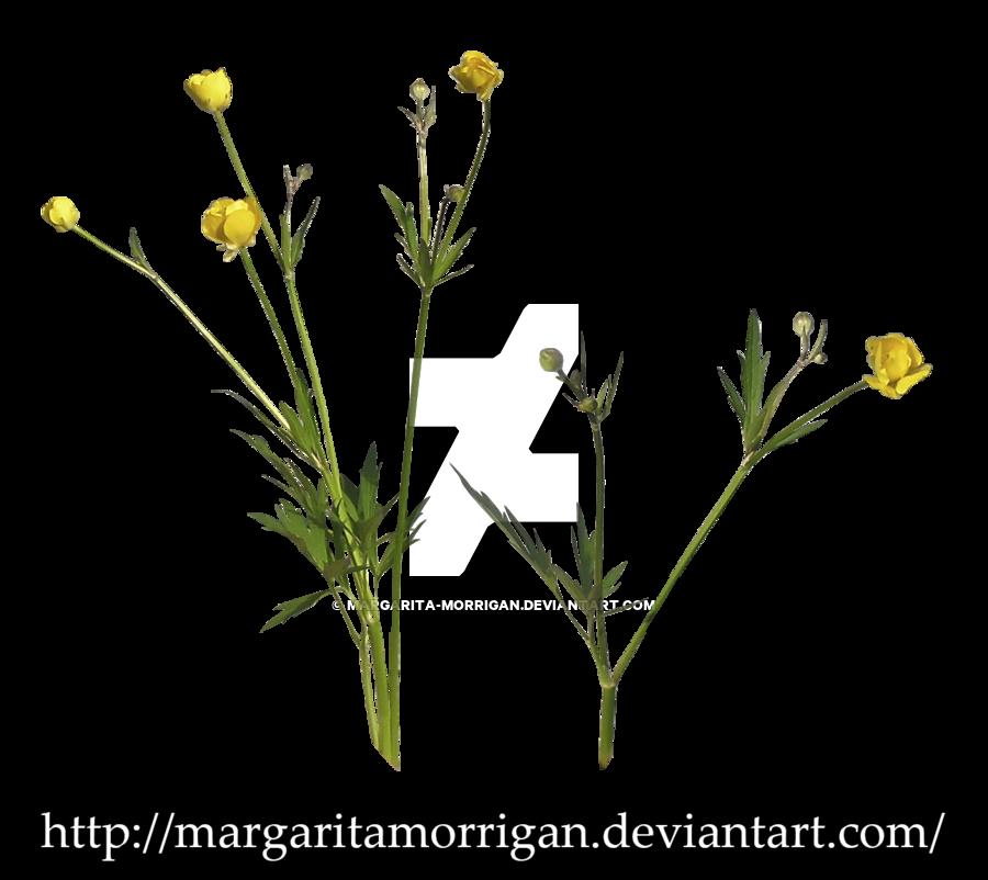 Wildflowers By Margaritamorrigan By Margarita Morrigan Hdpng.com  - Wildflowers, Transparent background PNG HD thumbnail