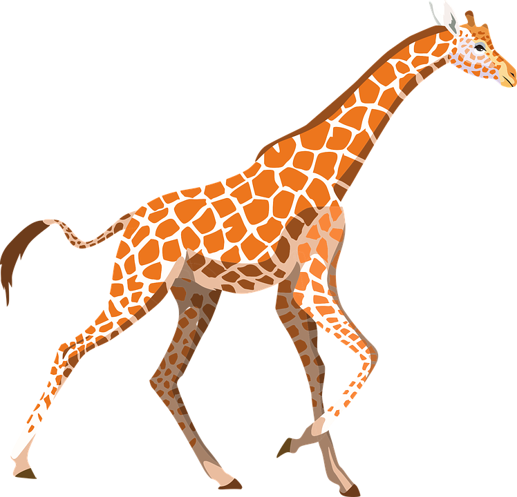 Giraffe, Zoo, Animal, Wild, Wildlife, Africa, Mammal - Wildlife, Transparent background PNG HD thumbnail