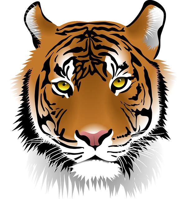 Tiger, Sumatran Tiger, Wildlife, Man Eater, Wildcat - Wildlife, Transparent background PNG HD thumbnail