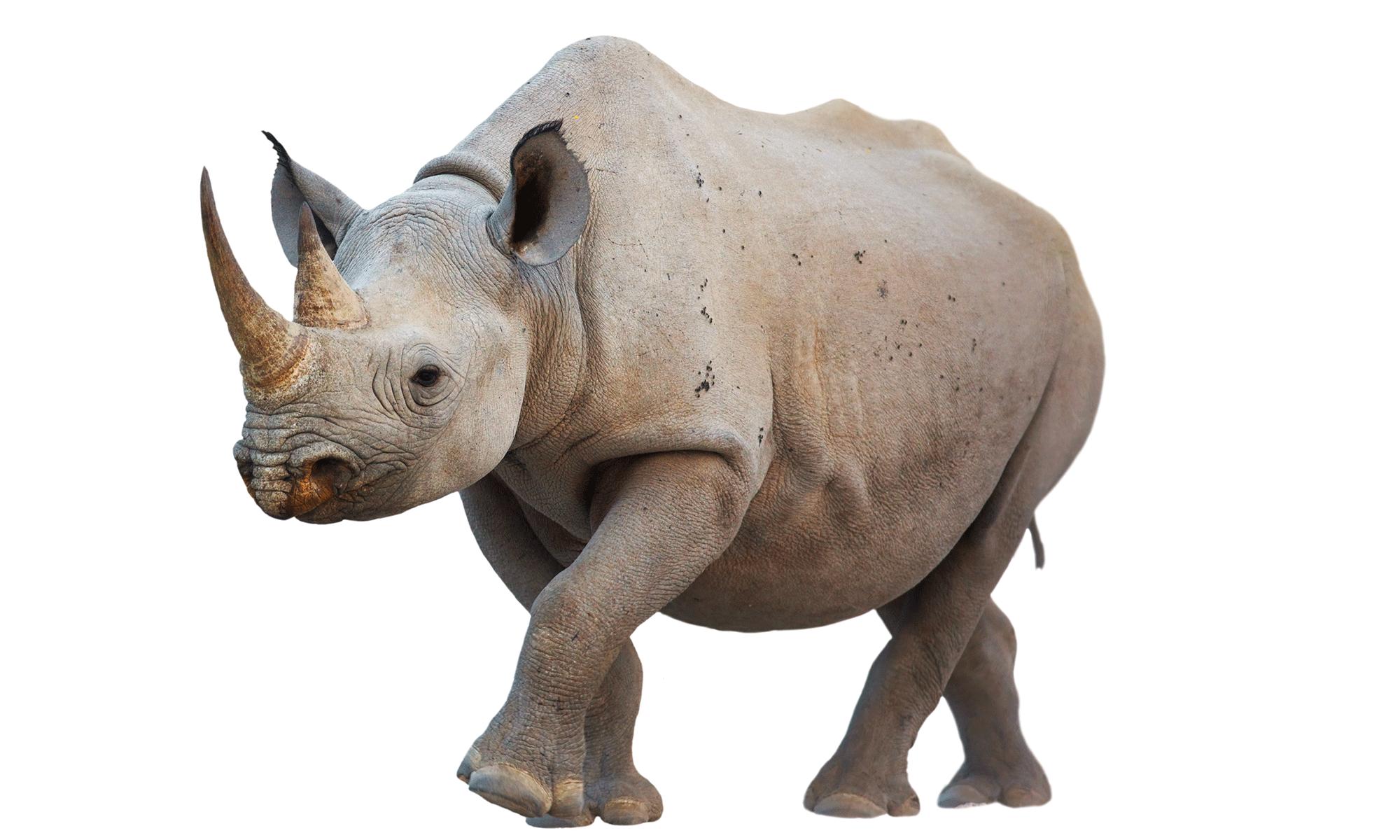 Wildlife Tracking - Wildlife, Transparent background PNG HD thumbnail