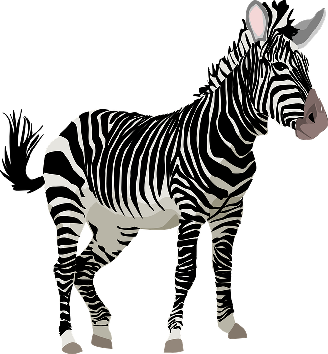Zebra, Africa, Animal, Safari, Zoo, Wildlife - Wildlife, Transparent background PNG HD thumbnail