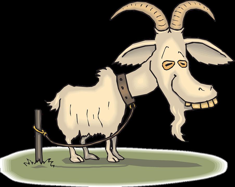 Alte, Ziege, Tier, Müde, Reifen, Gebunden, Seil, Kragen - Ziegenbock, Transparent background PNG HD thumbnail