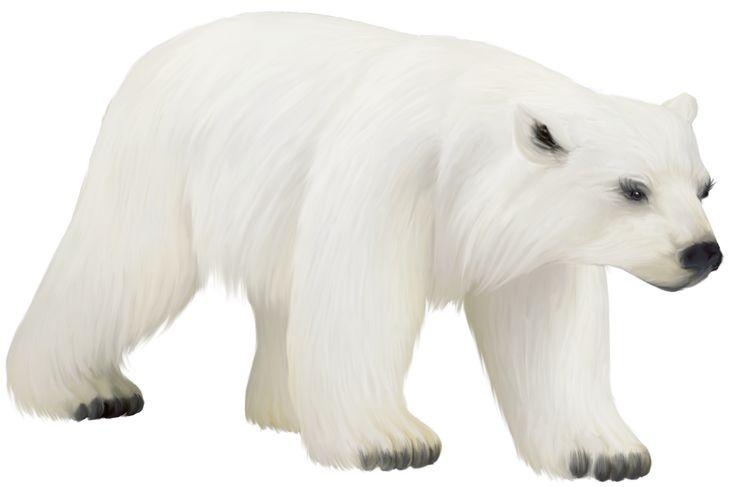 Large Painted Polar Bear Clipart Zvieratk - Polar Bear, Transparent background PNG HD thumbnail