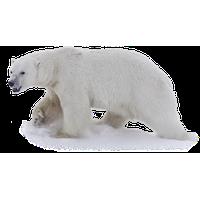 Polar Bear Png Image Png Image - Polar Bear, Transparent background PNG HD thumbnail
