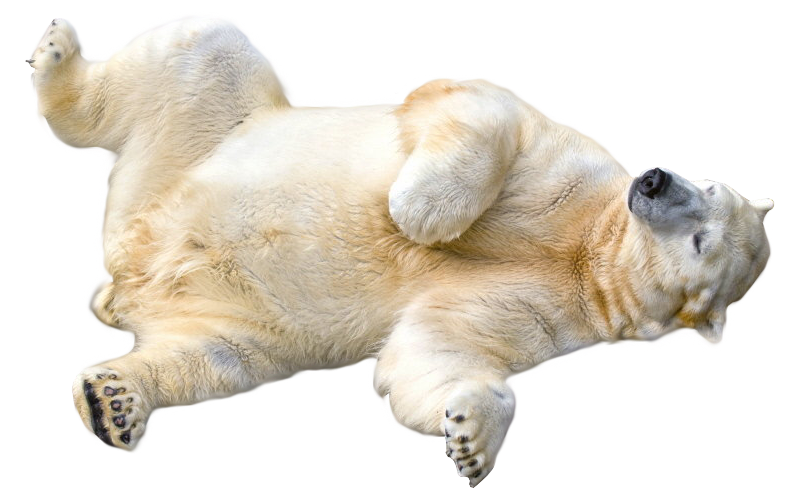 Polar Bear Transparent Png - Polar Bear, Transparent background PNG HD thumbnail
