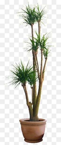 Hd Plant Pot, Bonsai, Decoration, Potted Png Image - Pot, Transparent background PNG HD thumbnail