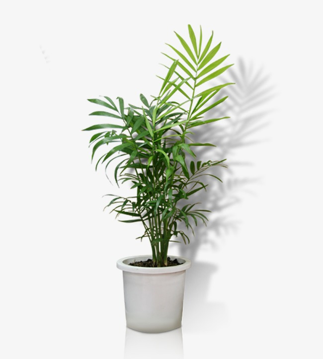 Potted, Potted, Flower Pot, Greenery Png Image - Pot, Transparent background PNG HD thumbnail