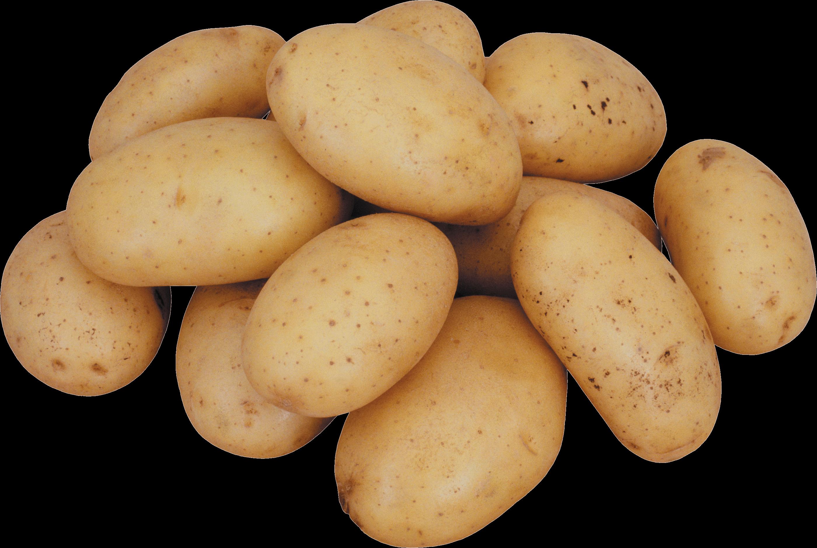 Potato HD PNG