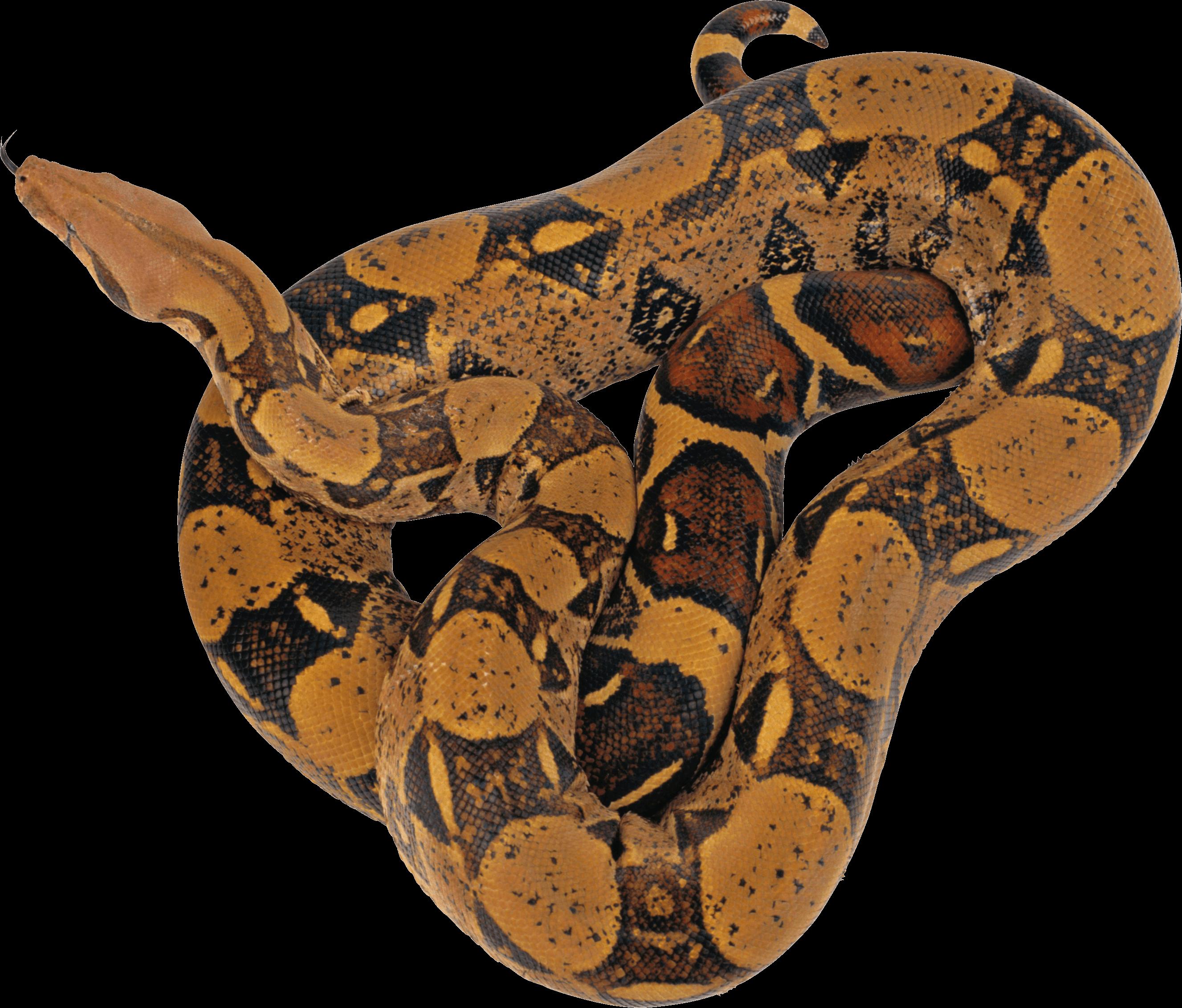 Python Snake Png - Download Png Image   Snake Png Image Picture Download, Transparent background PNG HD thumbnail