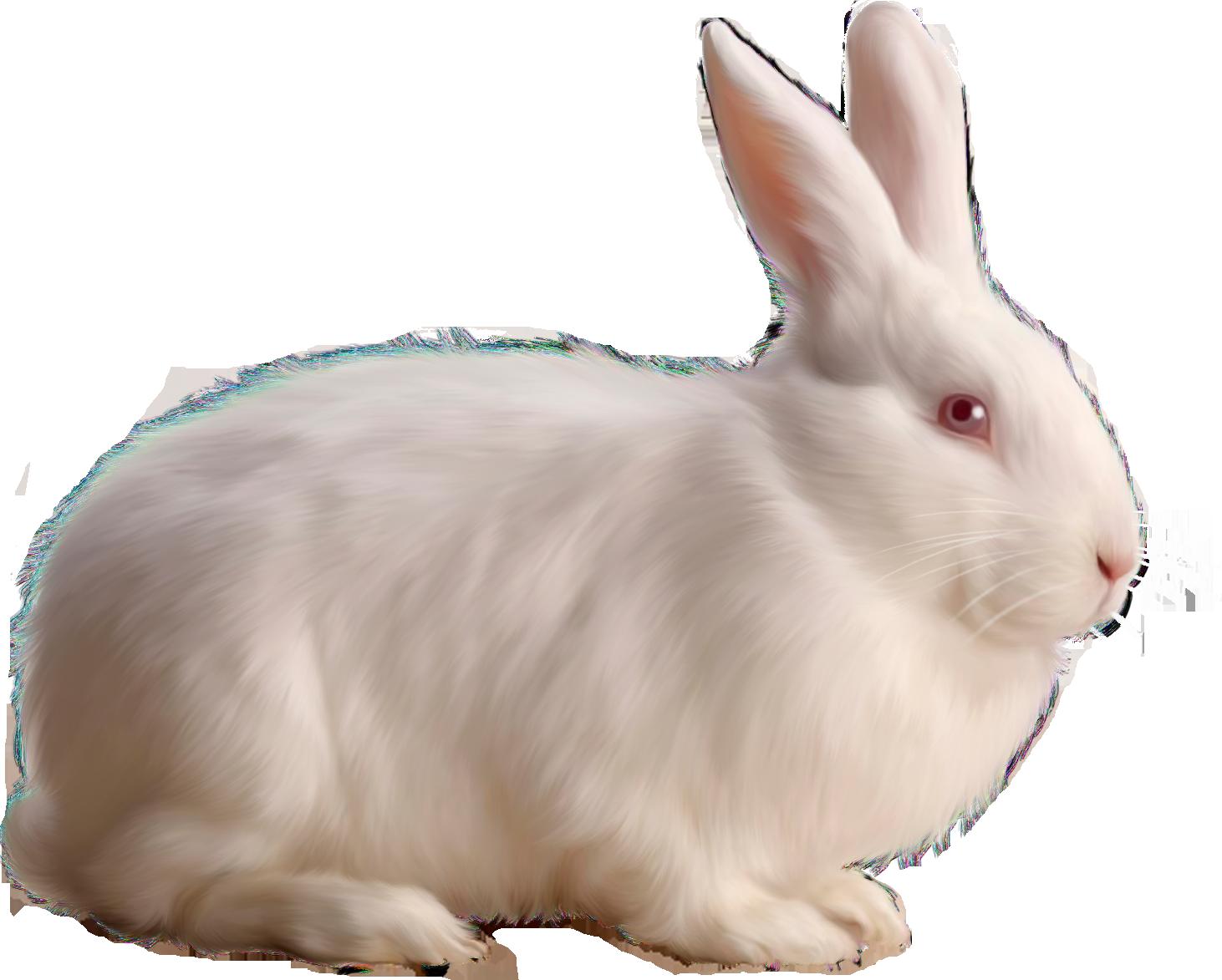 Rabbit Free Png Image.png (1462×1173) - Rabbit, Transparent background PNG HD thumbnail