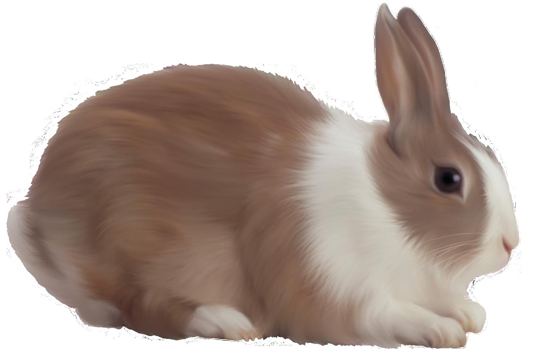 Rabbit Png Image - Rabbit, Transparent background PNG HD thumbnail