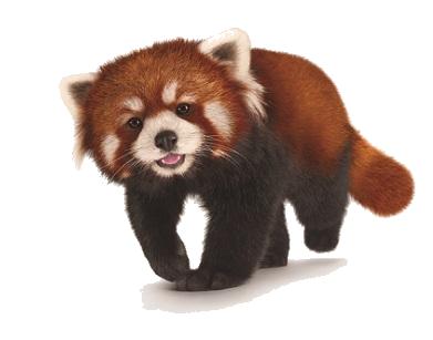 Red Panda PNG