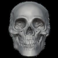 Skeleton Head Free Png Image Png Image - Skeleton Head, Transparent background PNG HD thumbnail