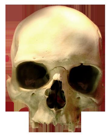. Hdpng.com Skull Images Human Skull - Skeleton Head, Transparent background PNG HD thumbnail