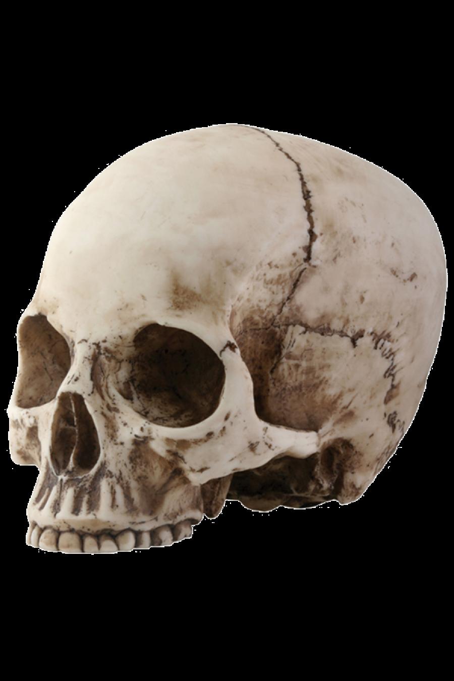 Skull Png Image - Skeleton Head, Transparent background PNG HD thumbnail