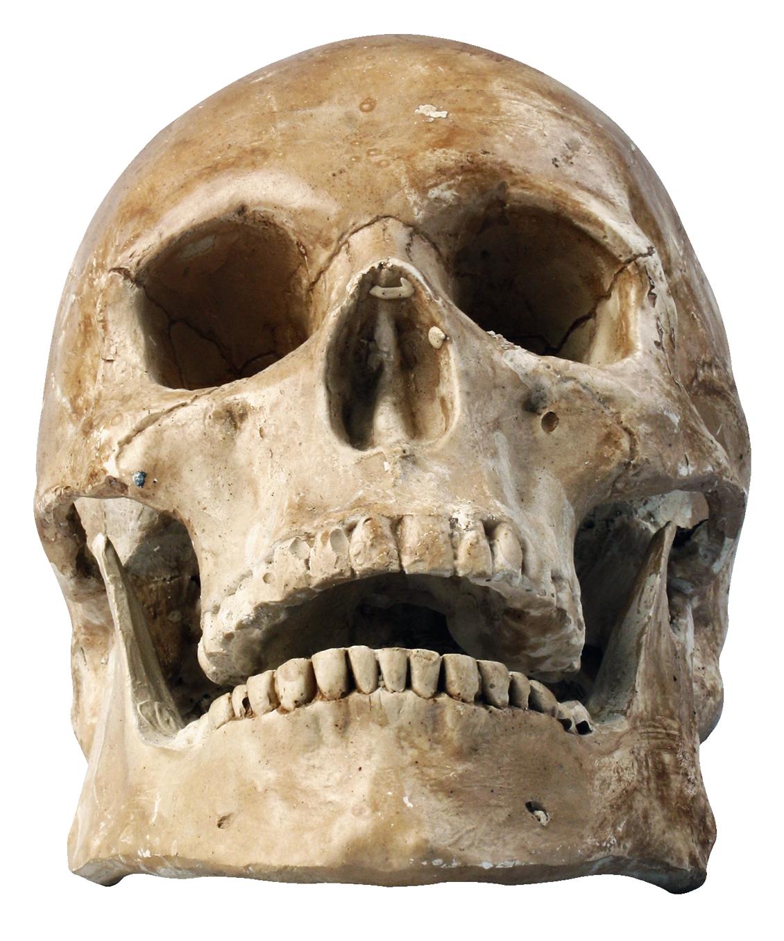 Skull Png Transparent Image - Skeleton Head, Transparent background PNG HD thumbnail