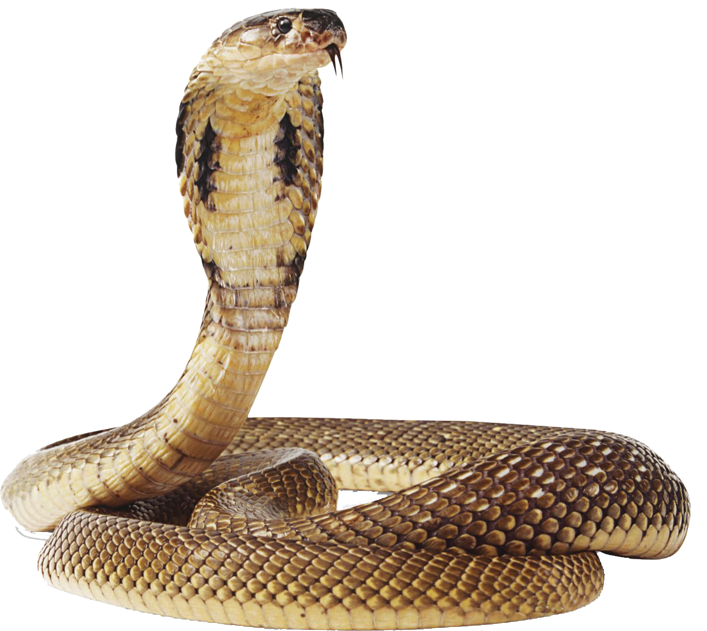 Snake HD PNG