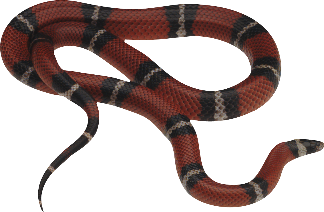 Snake Png Image Picture Download Free - Snake, Transparent background PNG HD thumbnail