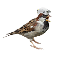 Sparrow Png Picture Png Image - Sparrow, Transparent background PNG HD thumbnail